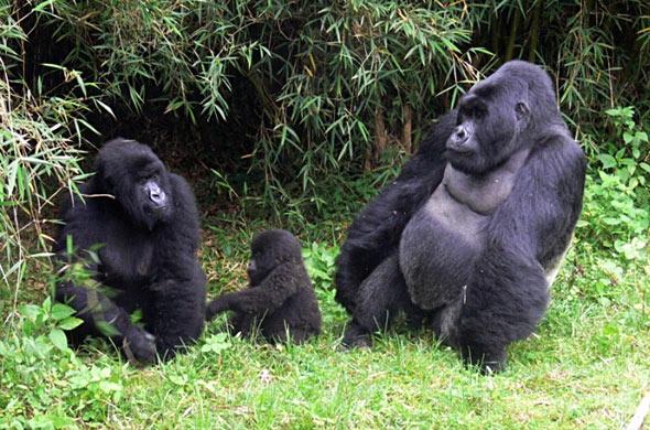 4-day-rwanda-gorilla-trekking