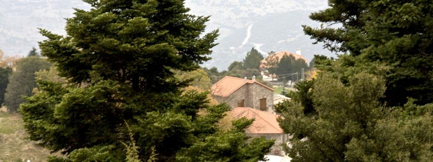 Αρτεμις Καλλίστη, Φωκίδα