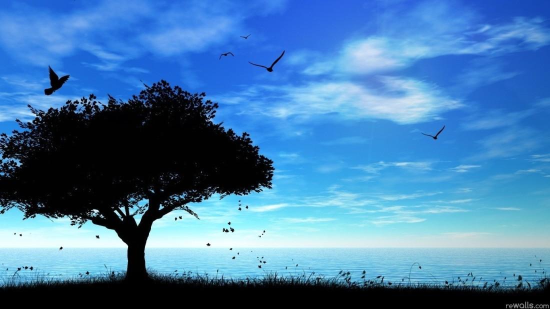 beaches-birds-clouds-blue-night-nature-silhouette-trees-free-beach-desktop-wallpaper-backgrounds.jpg