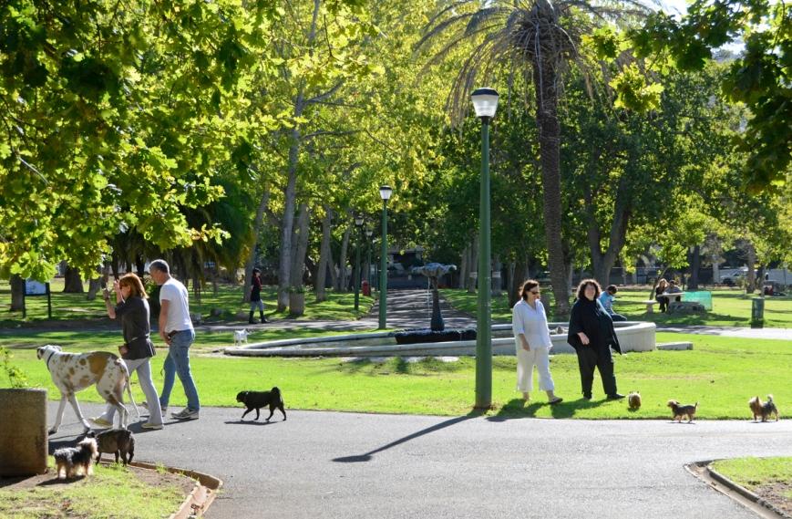 De-Waal-Park-Dog-Friendly-Walks-in-Cape-Town