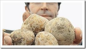 Ο ΑΝΤΡΕΑΣ ΧΑΪΣΕ της γερμανικής εταιρείας BASF κρατά γενετικά