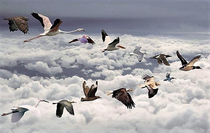 sky_birds 32)