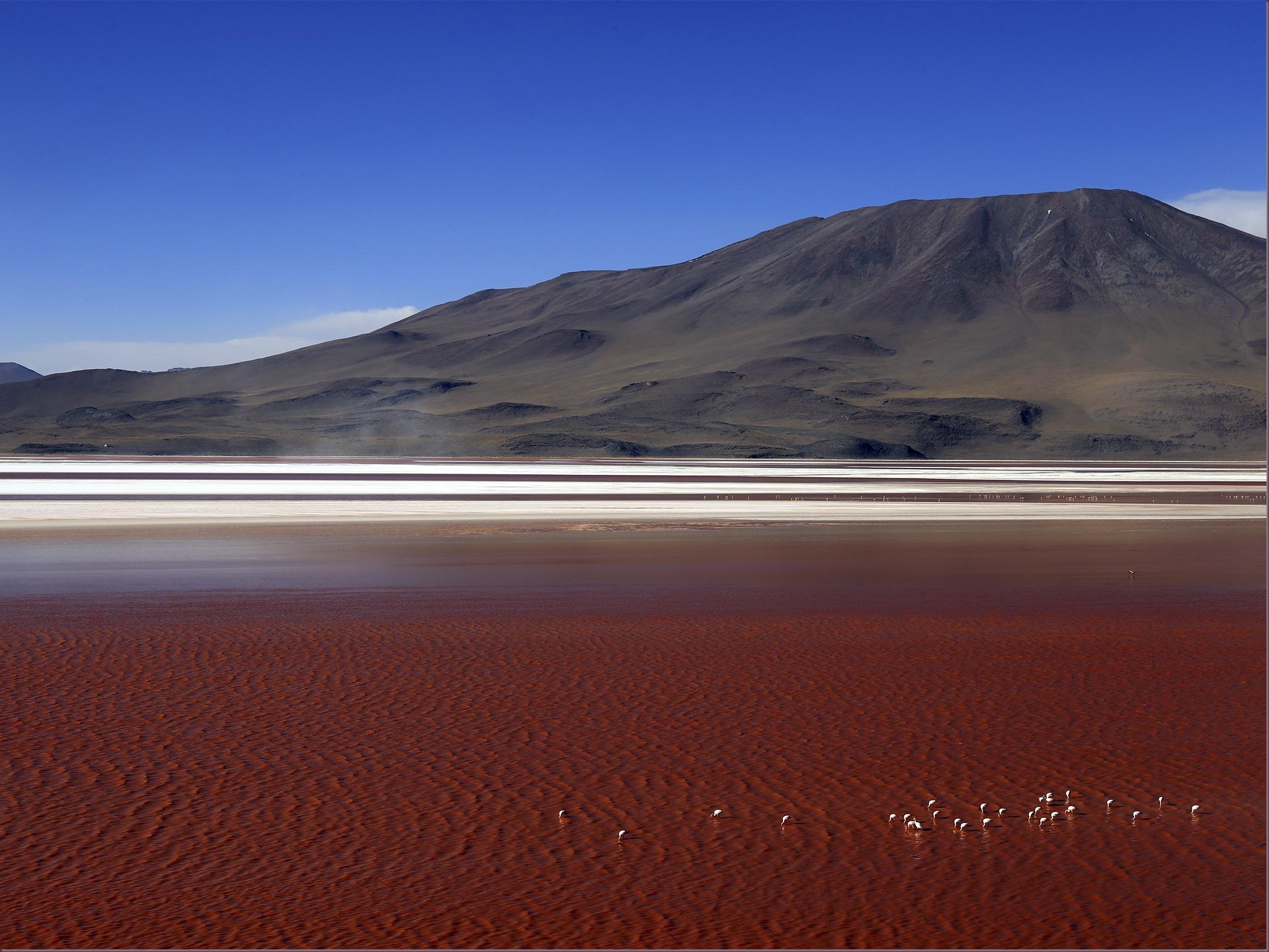laguna-colorada-bolivia-c
