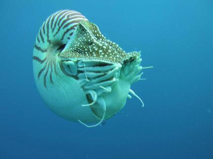 nautilus_profile-