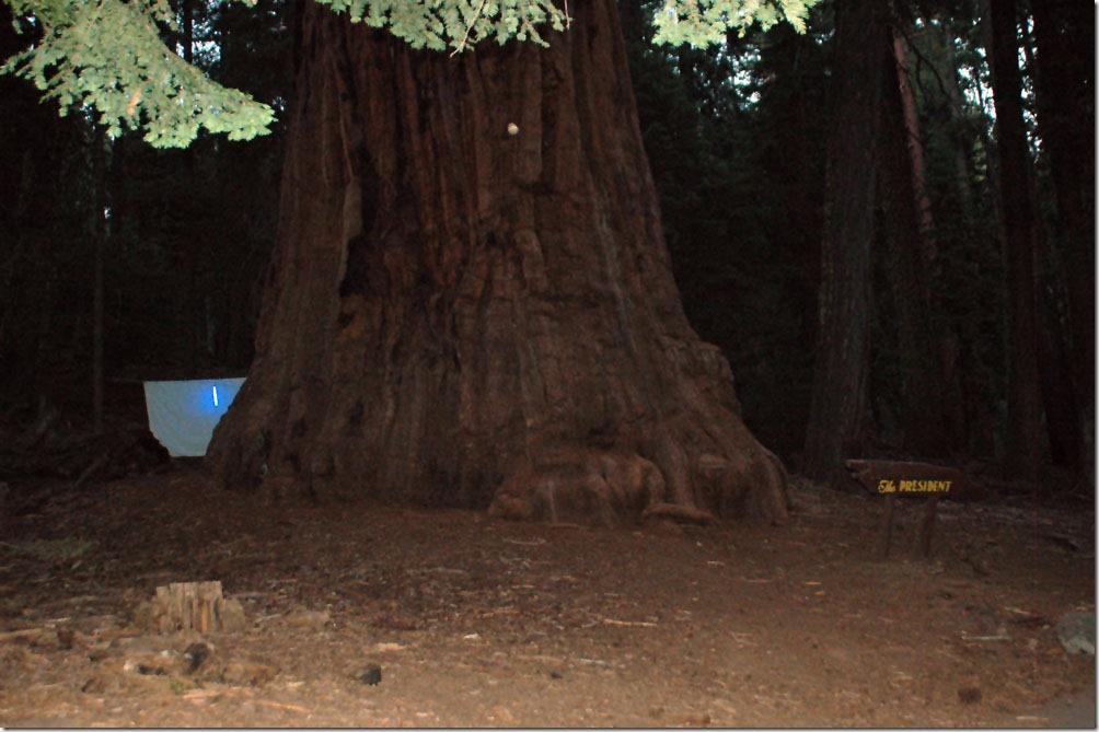 Sequoia_00
