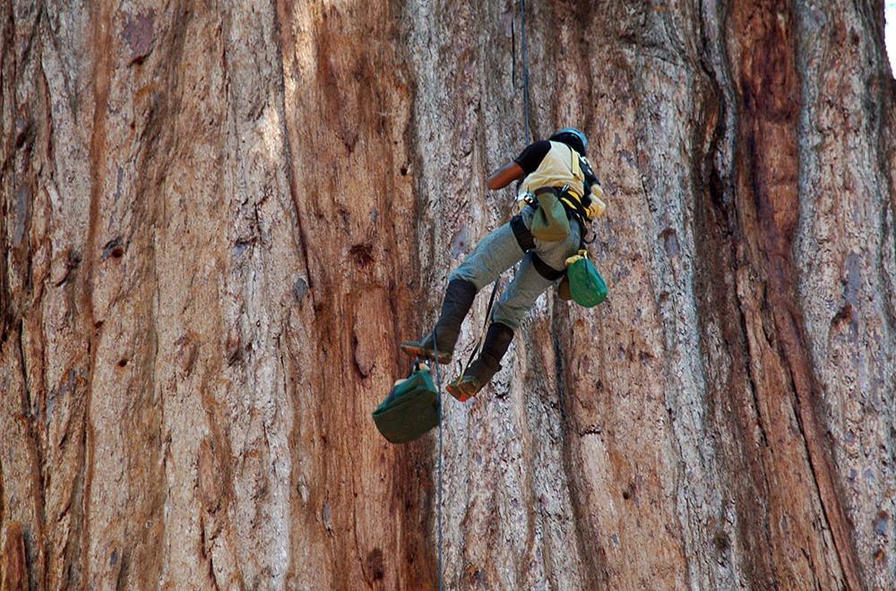 Sequoia_07