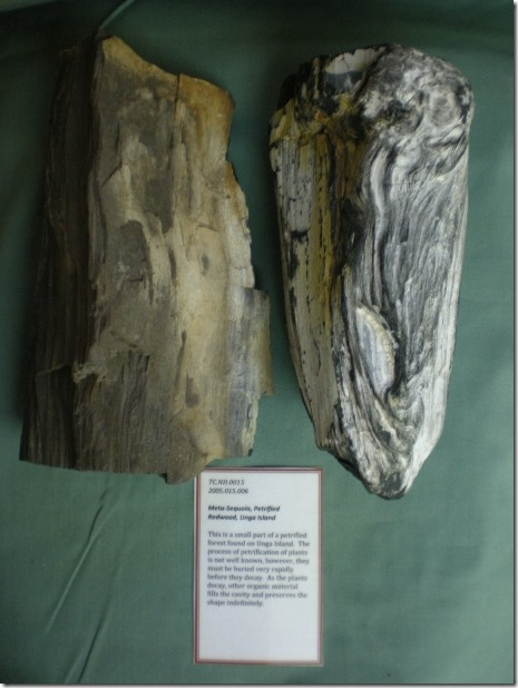 TC.NH.015Meta-Sequoia, Petrified Redwood, Unga Island