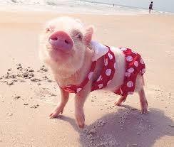 pig-pink.jpg