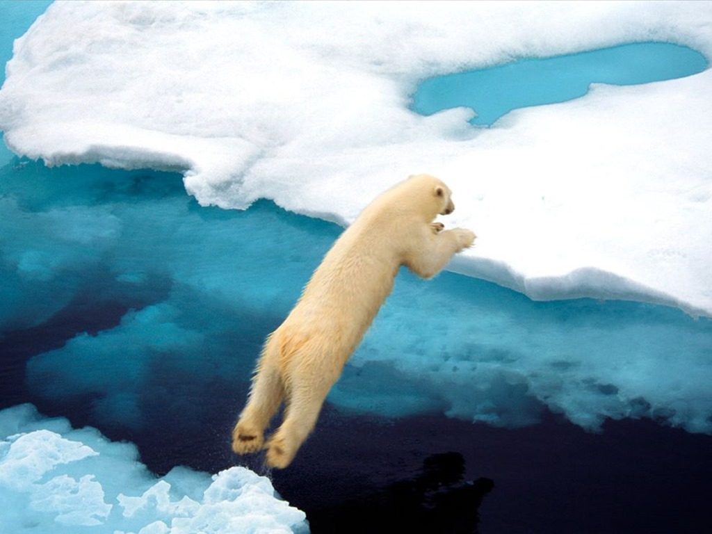 polar-bear-leaping_