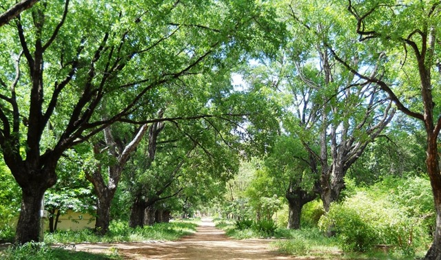 Neem-trees-1024x609