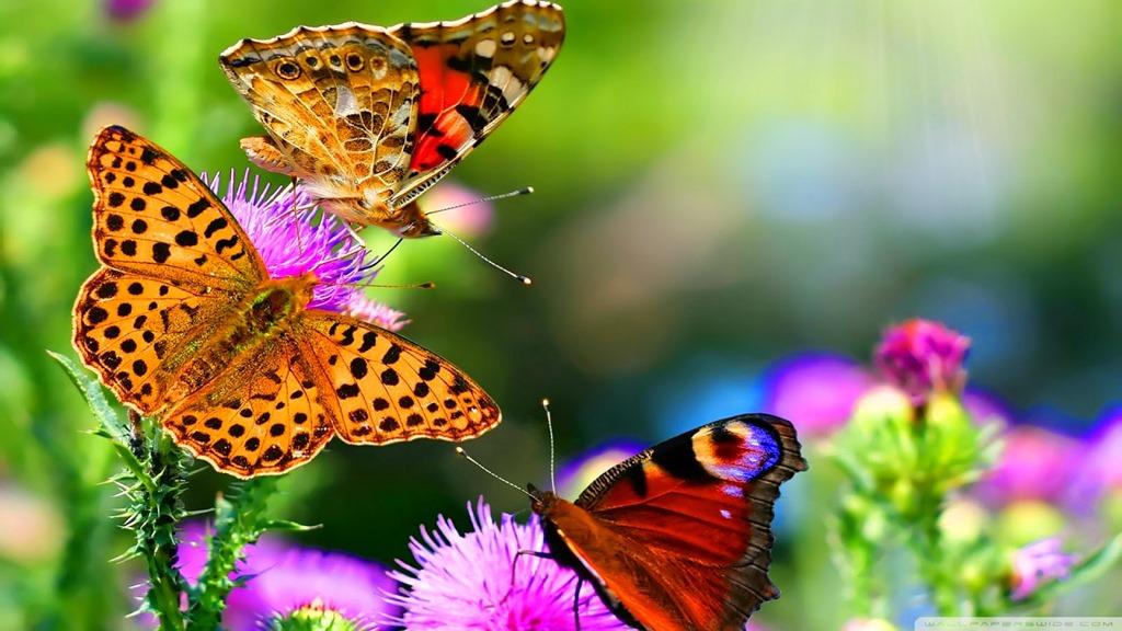 الفراشات،-ثقف-نفسك-1