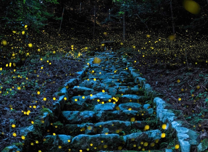 village in the Tamba region of Japan, twinkling fireflies light up the Forest of the Gods on a summer evening