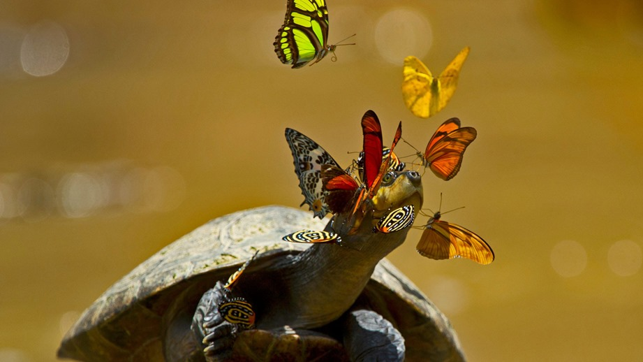 a-yellow-spotted-river-turtle-in-yasuni-national-park-ecuador-7L8ARAQ