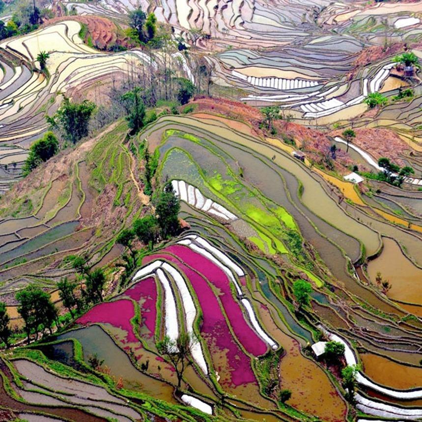 yunnan_china(1) rice fields in Yunnan, China