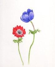 anemone0303