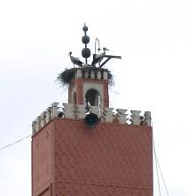 storks4.jpg Medina, Μαρακες.jpg