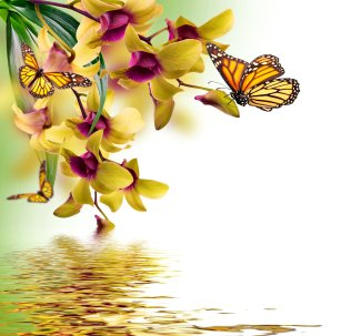 butterfly-orchid-painting-reflection